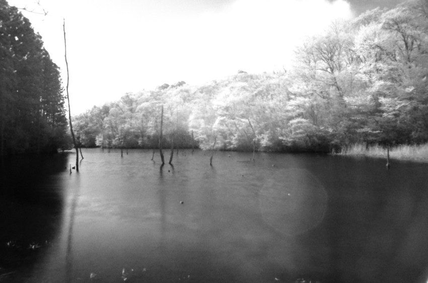 海上の森の池