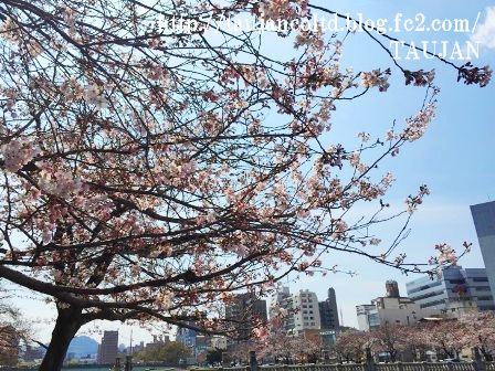 2015 TAUJAN 3/29 桜