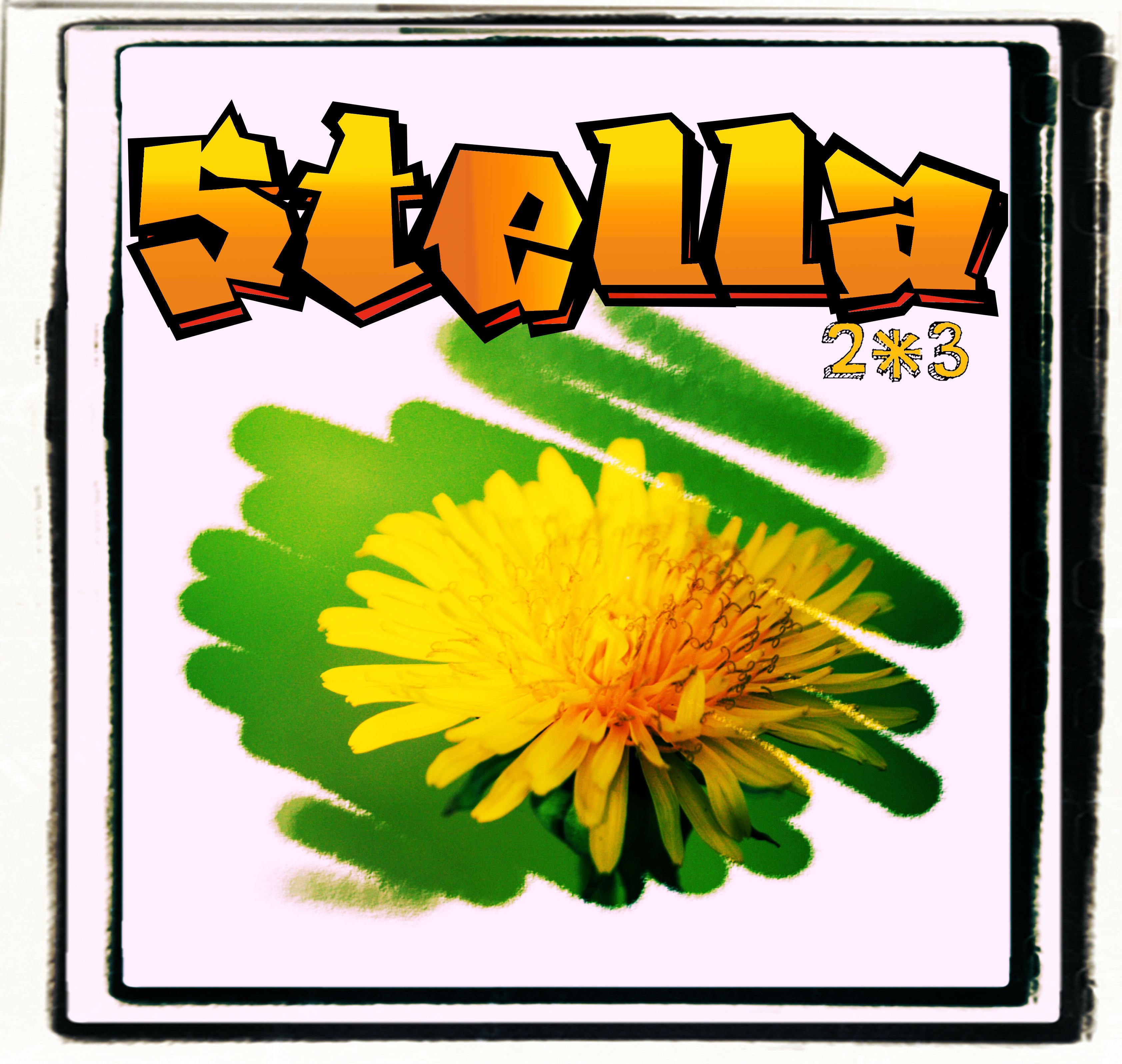 stella表紙