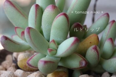 IMG_6189_小