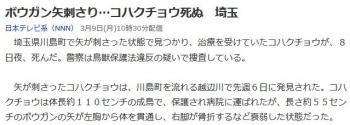 newsボウガン矢刺さり…コハクチョウ死ぬ 埼玉