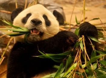 ジャイアントパンダでお馴染みの動物園