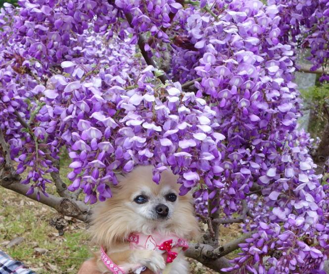 花かんむり