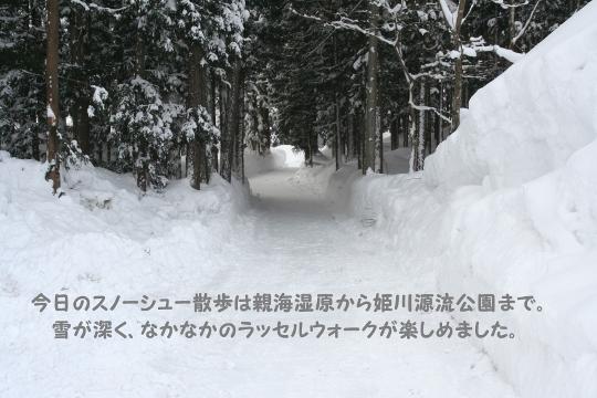 2月1日親海湿原・姫川源流公園スノーシューウォーク (540x360)