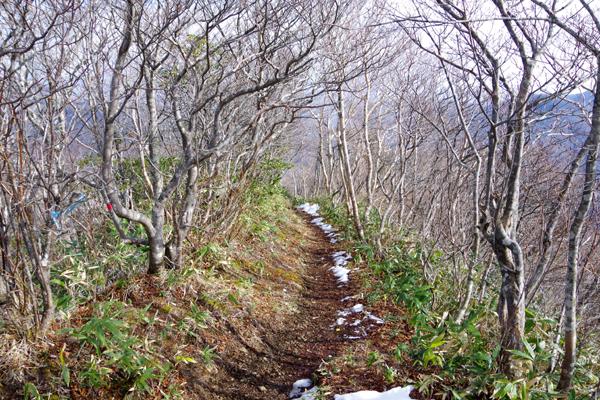 甲子山19