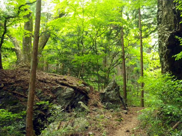 ツツジ山03