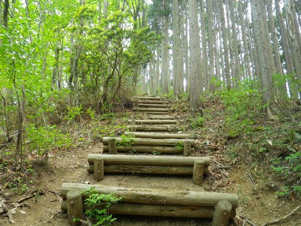 ツツジ山09
