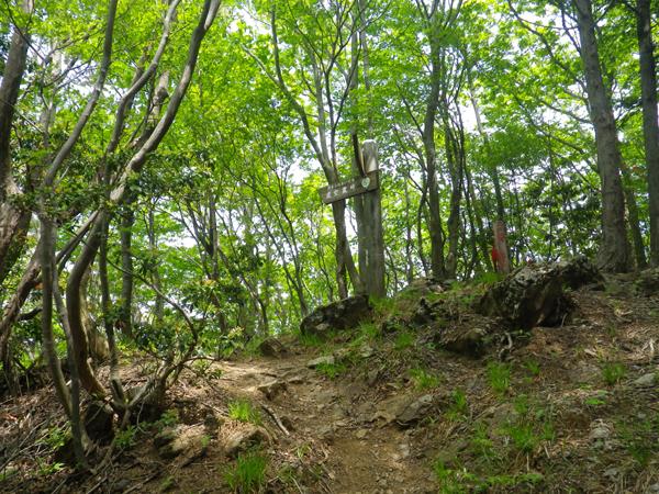 ツツジ山10