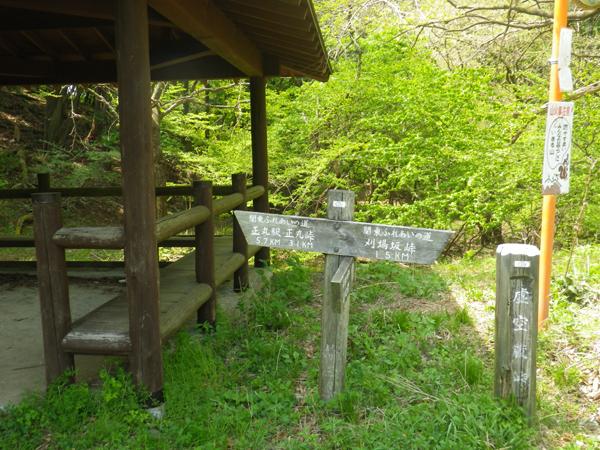 ツツジ山15