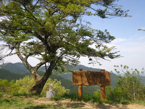 ツツジ山18