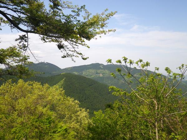 ツツジ山19