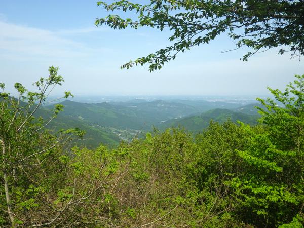 ツツジ山20