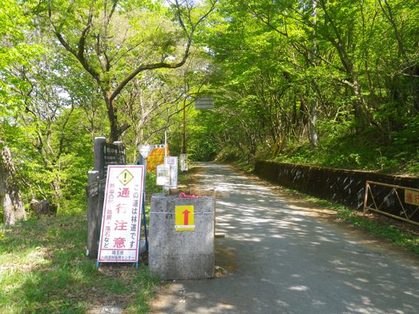 ツツジ山23