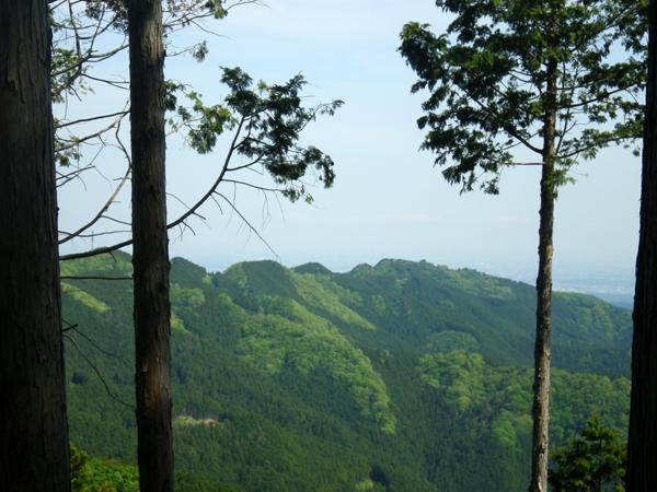 ツツジ山28