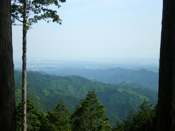 ツツジ山29