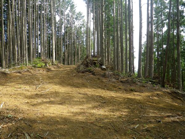 ツツジ山33