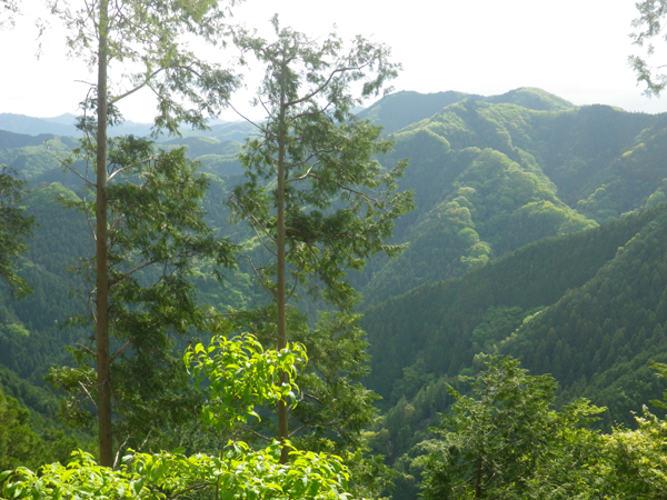 ツツジ山34