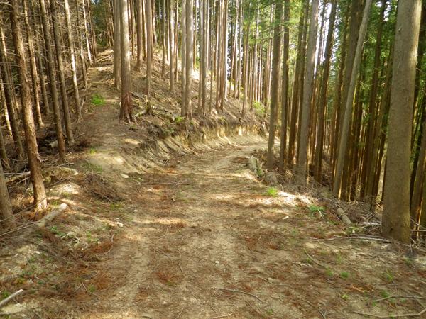 ツツジ山35