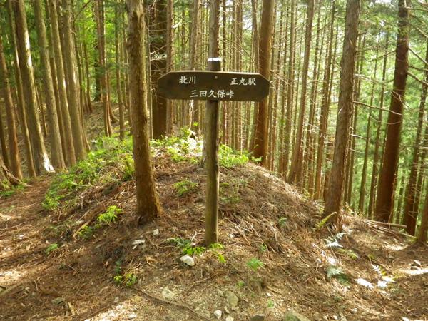ツツジ山36