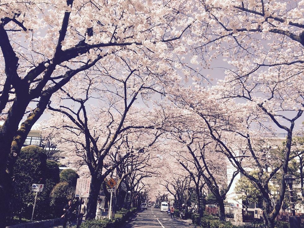 写真 2015-03-31 13 25 03