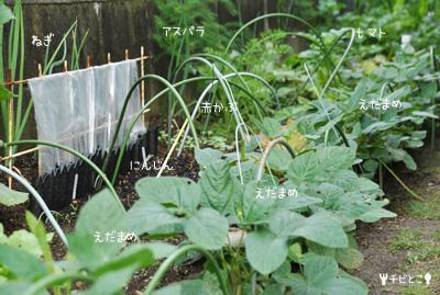 チビとこ菜園