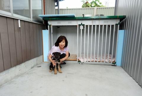 ジャーマンシェパード子犬 ラッツ