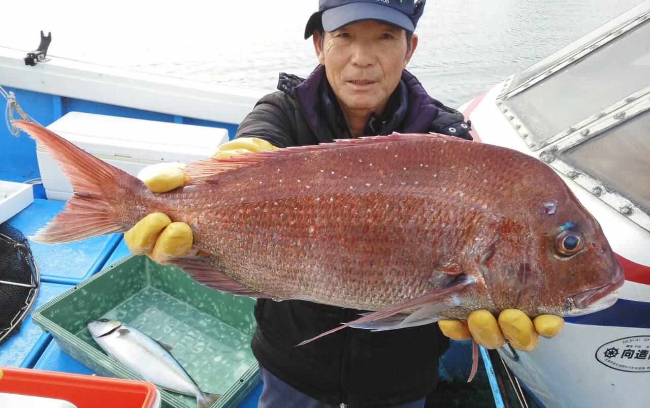 150205釣果(鯛)
