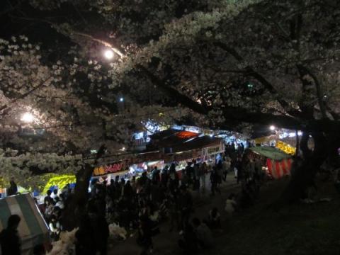 岡崎の夜桜