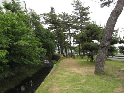 大平町の松並木