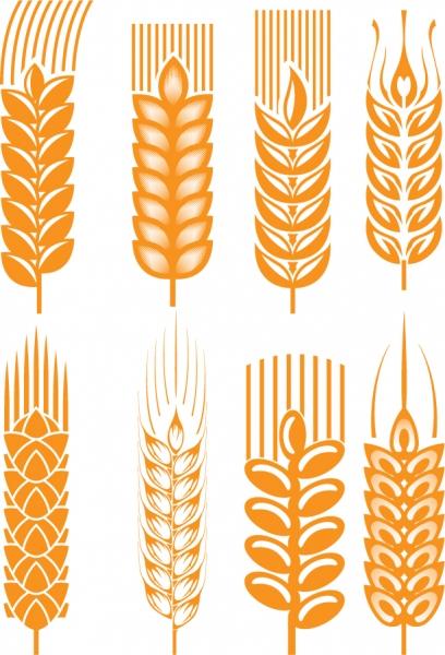 黄金の小麦のクリップアート golden wheat vector