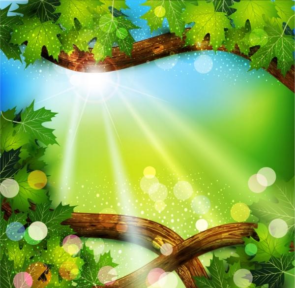 木漏れ日の射す樹の背景 green leaves on natural background