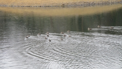 大池に水戻る2