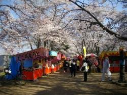 黒磯公園桜2