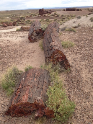 Petrified-forest2014.jpeg