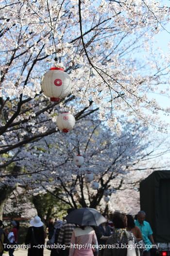 20150405sakura4.jpg