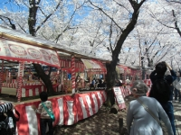 150402_京都桜旅04