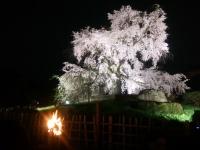 150402_京都桜旅10