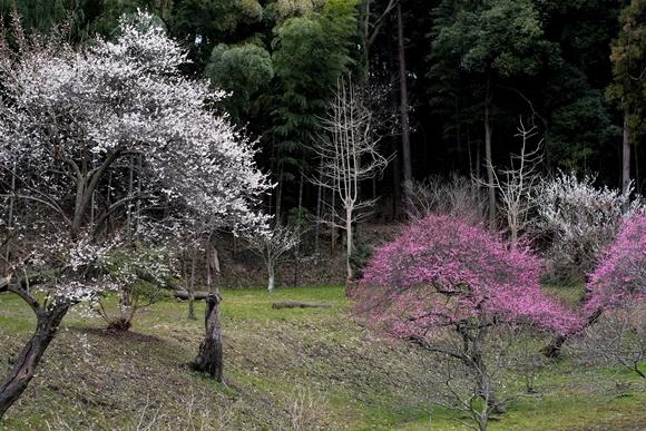 春の庭先-3_R