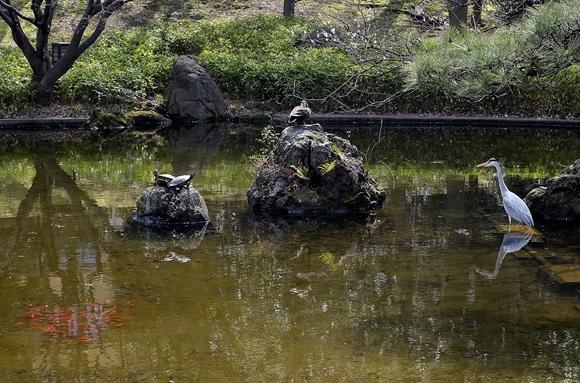 春の池-3_R