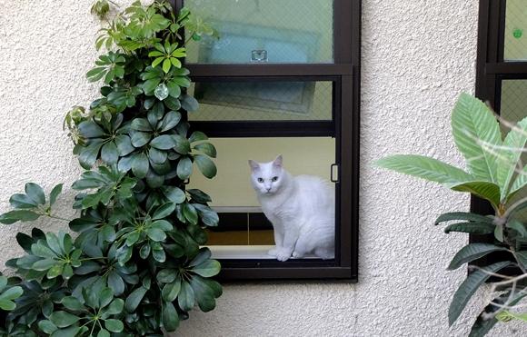 窓辺-2_R
