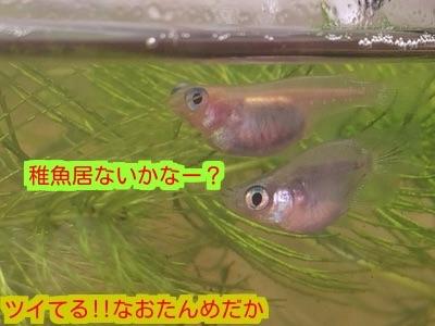 20141221202159016.jpg