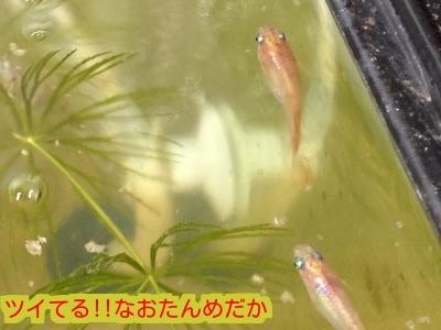 2014122819423260a.jpg