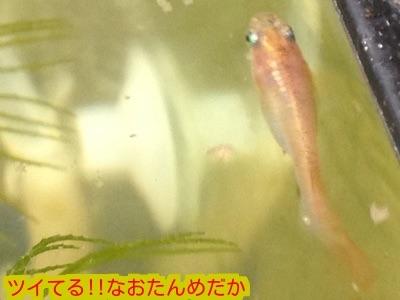 2014122819423394d.jpg