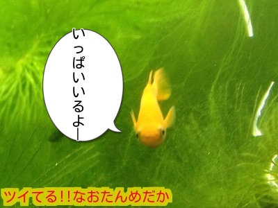 20150129200021ada.jpg