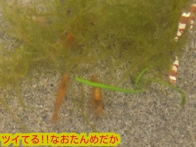 20150131194712dea.jpg