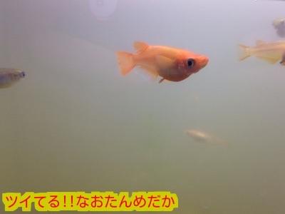 201503022011174d9.jpg