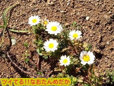 20150324203000b0a.jpg