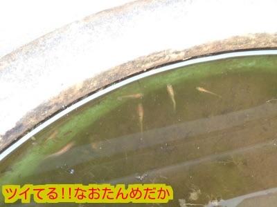 2015032918154815c.jpg