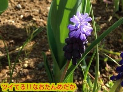 20150330184629ace.jpg