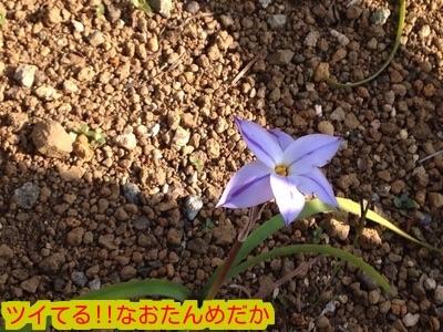 20150330184642bf0.jpg